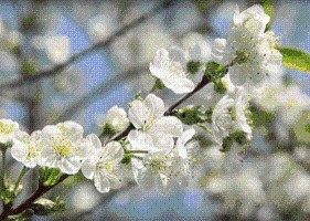 大马戏、台湾美食、稻草人展……玩转梨花节看这里!